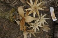 coutume_XARACUU (bouquet tressé en cocotier)